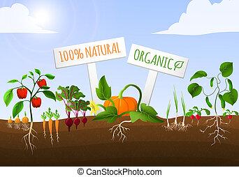 növényi, poszter, kert