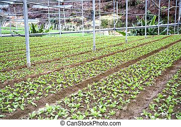 növényi, tanya