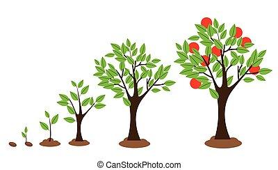 növekedés, fa