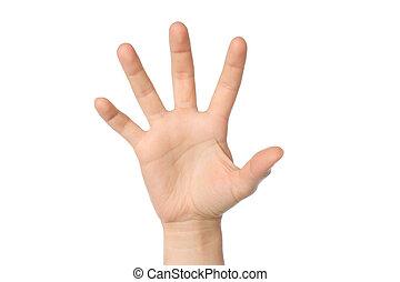 nő, kéz, háttér, fehér