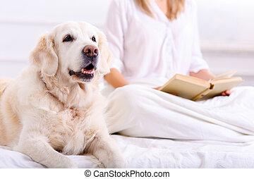 nő, neki, ágy, törődik, fekvő, kutya