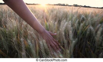 nő, tető, lány, fiatal, termés, kéz, mező, napnyugta, felnőtt, női, érzés, vagy, napkelte, árpa