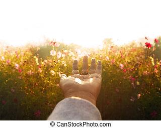 nő, világegyetem, mező, kaszáló, menstruáció, morning., felett, kéz