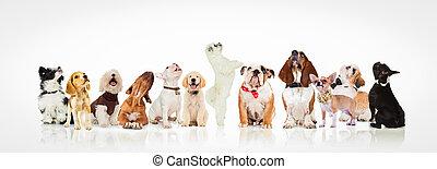 nagy csoport, feláll, látszó, kutyus, kíváncsi, kutyák