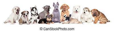 nagy, kutyus, csoport, kutyák
