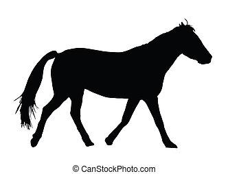 nagy, portré, ló, árnykép, galoppozó