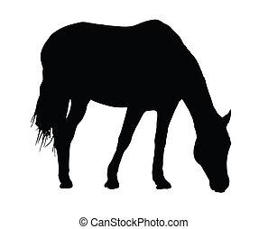 nagy, portré, ló, árnykép, legelés