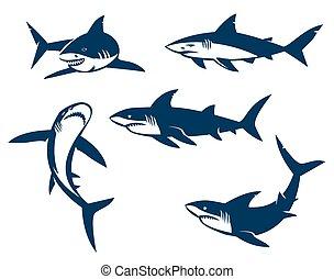nagy, silhouettes., fekete, állhatatos, cápa