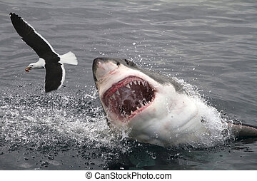 nagy, támad, fehér, cápa