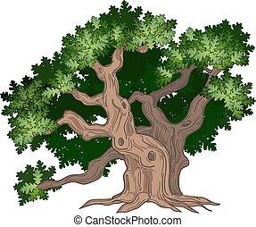 nagy, tölgyfa