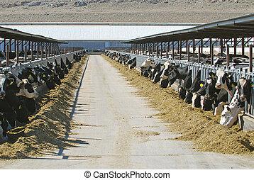 nagy, tanya, tejcsarnok