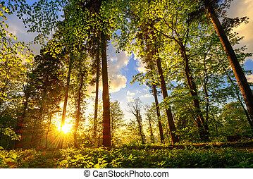 nagyszerű, út, erdő, napnyugta, fény