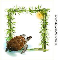 nap, bambusz, háttér, turtle., tropikus, tenger
