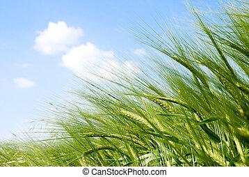 nap, bedugaszol, gabonanemű