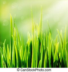 nap, friss, zöld fű, eredet