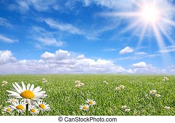 nap, kívül, fényes, boldog, eredet