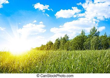 nap, zöld terep, napnyugta, friss, fű