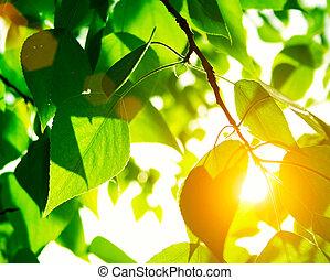 nap, zöld, zöld, fénysugár