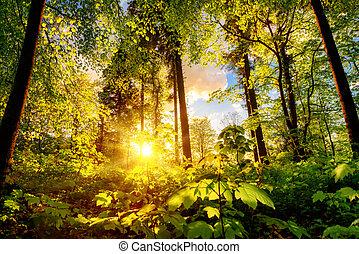 napnyugta, fény, erdő, tisztás, meleg
