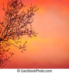 napnyugta, fa, háttér, virágzó