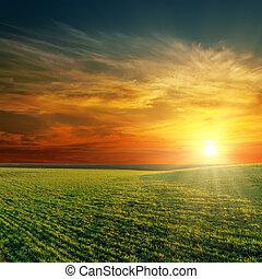 napnyugta, felett, jó, zöld terep