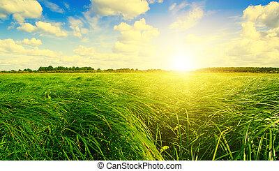napnyugta, kék, fű nap, alatt, zöld terep, erdő, sky.