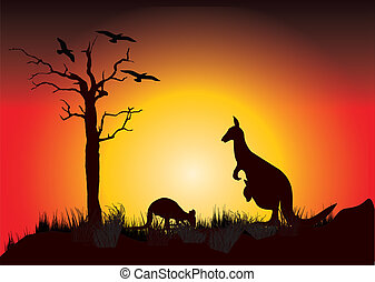 napnyugta, kenguru, két