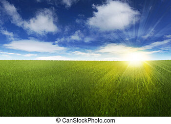 napos, felett, ég, füves, mező