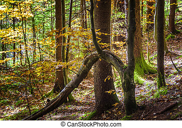napos, forest., ősz