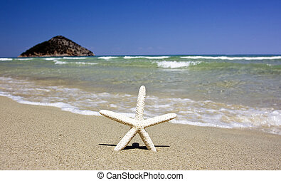 napos, tengerpart, tengeri csillag, nyár