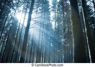 napsugarak, át, erdő
