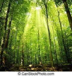 napsugarak, esés, erdő