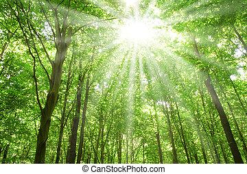 napvilág, erdő, bitófák