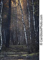 napvilág, erdő, eredet