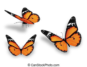 narancs, fehér, pillangók, három, elszigetelt