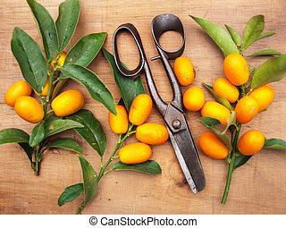 narancs, finom, kumquats