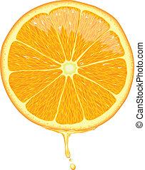 narancs szelet, -, vektor
