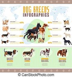 nem, kutya, infographics