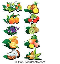 nuts., gyümölcs
