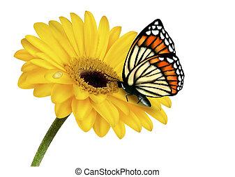 nyár, butterfly., vektor, sárga virág, illustration., természet