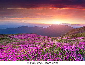 nyár, carpathian, napkelte, colorful hegy