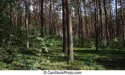 nyár, erdő, lábas