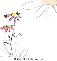 nyár, eredet, háttér, virágos, katicabogár, fehér