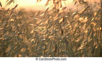 nyár, fű