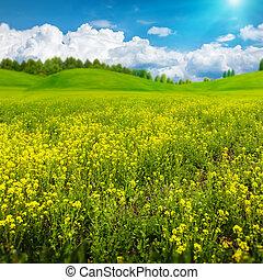 nyár, kaszáló, szépség, elvont, nap, tervezés, vidéki, -e, táj