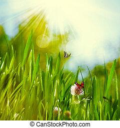 nyár, kaszáló, természetes, háttér, elvont, napos nap