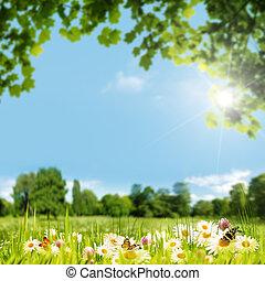 nyár, kaszáló, természetes szépség, háttér, nap