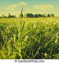 nyár, kaszáló, természetes szépség, nap, táj