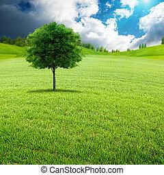 nyár, kaszáló, természetes szépség, zöld, nap, táj