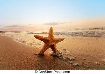 nyár, tengerpart., napos, tengeri csillag